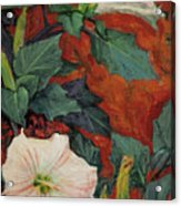 Datura Flower Acrylic Print