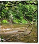 Davidson River Acrylic Print