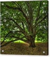 Dawes Arboretum Acrylic Print