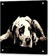 Dawg Acrylic Print