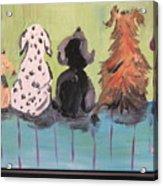Dawg Outhouse Acrylic Print