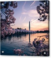 Dawn Blossoms Acrylic Print