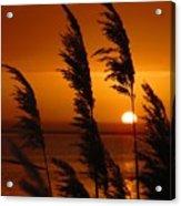 Dawn Grasses Acrylic Print
