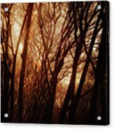 Dawn In The Trees Acrylic Print