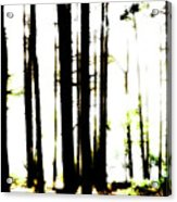 Dawn in the woods Acrylic Print