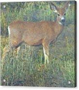 Dawn Names The Deer Acrylic Print