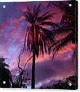 Dawn Palm 03 Acrylic Print