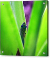 Day Gecko And Pineapple Plant Acrylic Print