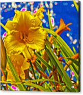 Day Lilies In The Sky With Diamonds  Acrylic Print