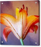 Day Lily Back Acrylic Print