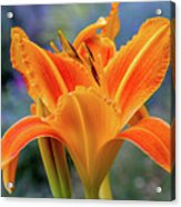 Day Lily Bright Acrylic Print