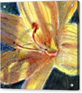Day Lily Close Up Acrylic Print