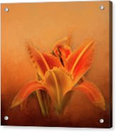Day Lily Emerging Acrylic Print