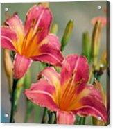 Day Lily Twins Acrylic Print
