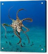 Day Octopus Acrylic Print