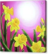 Daybreak Daffodils Acrylic Print