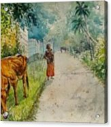 Daybreak In Kerala Acrylic Print