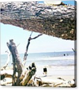 Daydreams and Driftwood Acrylic Print