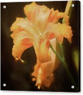 Daylily Dream Acrylic Print