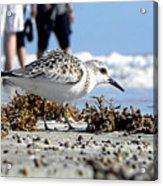 Daytona Beach Surf 001 Acrylic Print