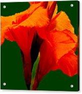 Dazzle Bouquet Acrylic Print