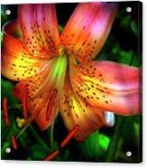 Dazzling Daylily  Acrylic Print