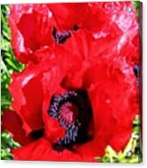 Dazzling Red Poppies Acrylic Print