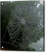 Db6325-dc Spiderweb On Sonoma Mountain Acrylic Print