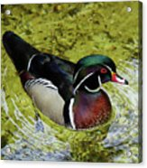 Dc Duck Acrylic Print