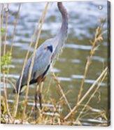 De Leon Springs Blue Acrylic Print