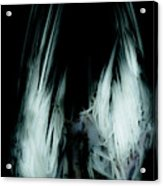 Dead Bird Grey Acrylic Print