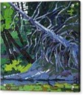 Dead Cedar Acrylic Print