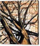 Dead Elm Acrylic Print