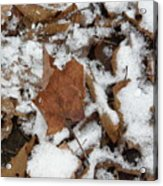 Dead Leaves In The Snow Acrylic Print