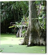 Wild Florida Dead Mans River Acrylic Print