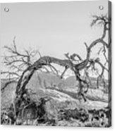 Dead Old Tree Near Monument Valley Arizona Acrylic Print