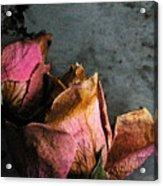 Dead Roses 1 Acrylic Print