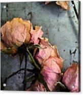 Dead Roses 3 Acrylic Print
