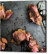 Dead Roses 4 Acrylic Print