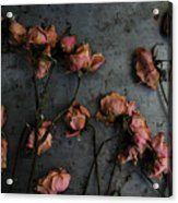 Dead Roses 6 - Photo Acrylic Print