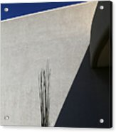 Dead Saguaro Building And Shadows Acrylic Print