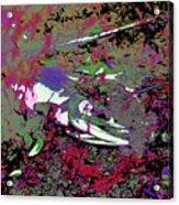 Dead Salmon 6 Acrylic Print