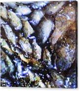 Dead Snake Acrylic Print