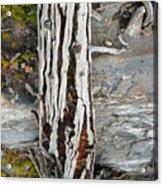 Dead Tree Above Tree Line I Acrylic Print