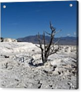 Dead Tree In Yellowstone Park Hot Springs  Acrylic Print