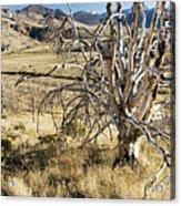 Dead Tree Panorama Acrylic Print