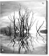 Dead Trees Bw Acrylic Print