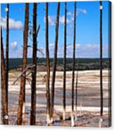 Dead Trees Standing In Hot Springs Within Yellowstone National P Acrylic Print