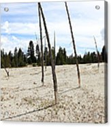 Dead Trees, Yellowstone Acrylic Print
