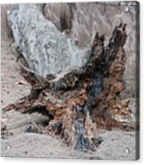 Dead Wood In Color Acrylic Print